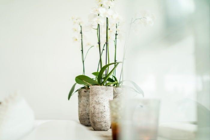 Orchidee kliniek Leiden